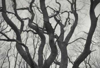 L'arbre Qui Danse