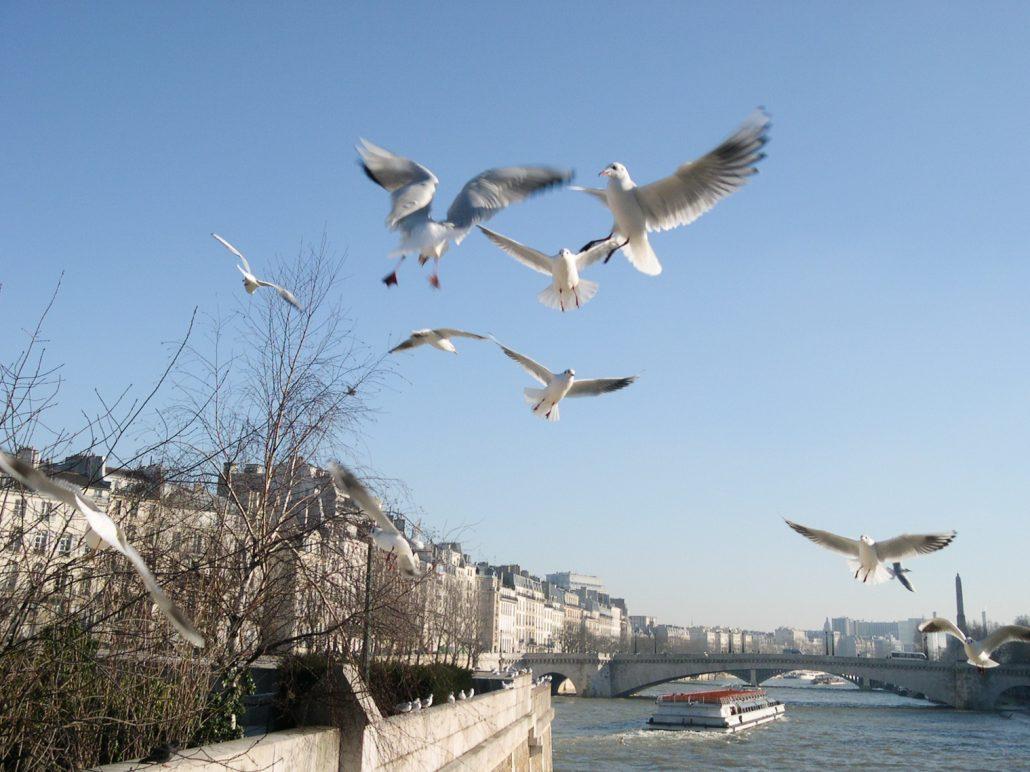 Au dessus de la Seine