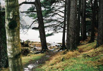 Wicklow Wood