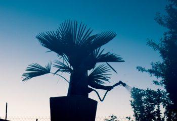 l'homme palmier