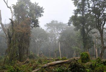 Brume dans la jungle
