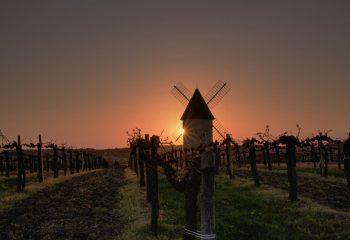 Windmill on the vine