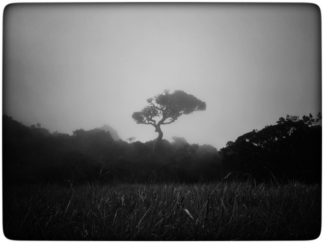 Mistery tree in the mist