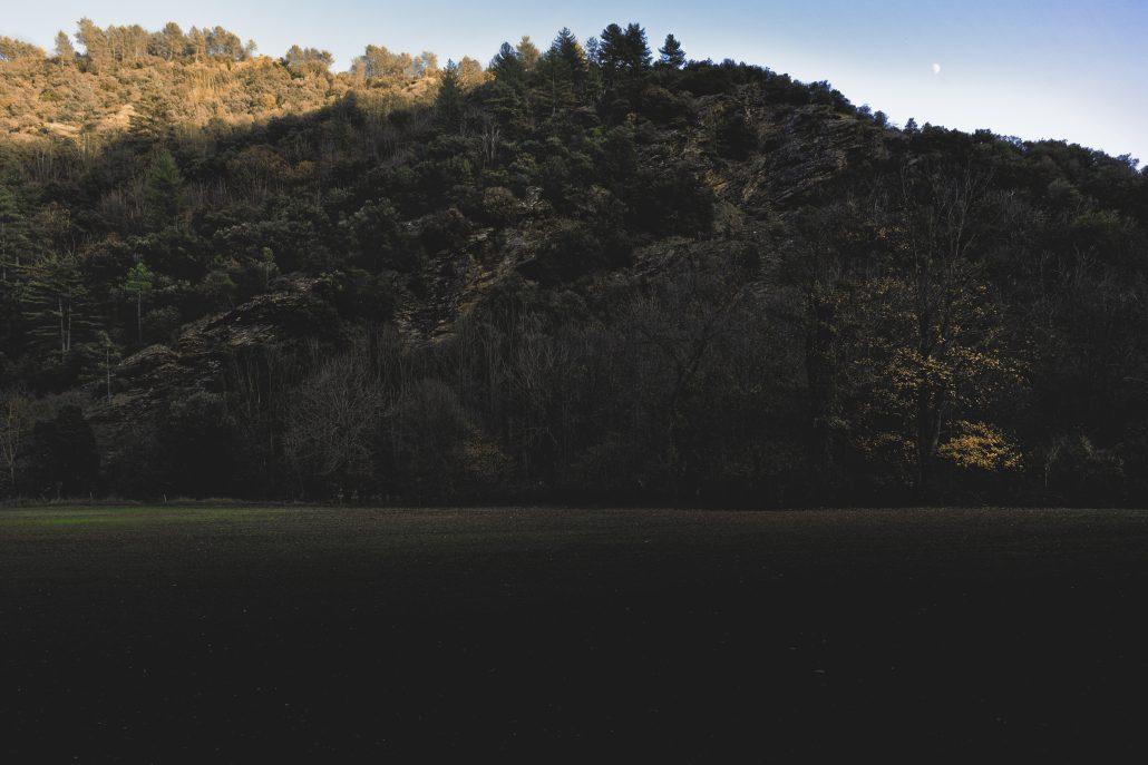 Schiste Forest