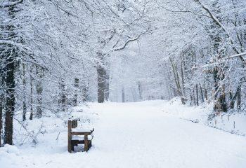 Banc sous la neige