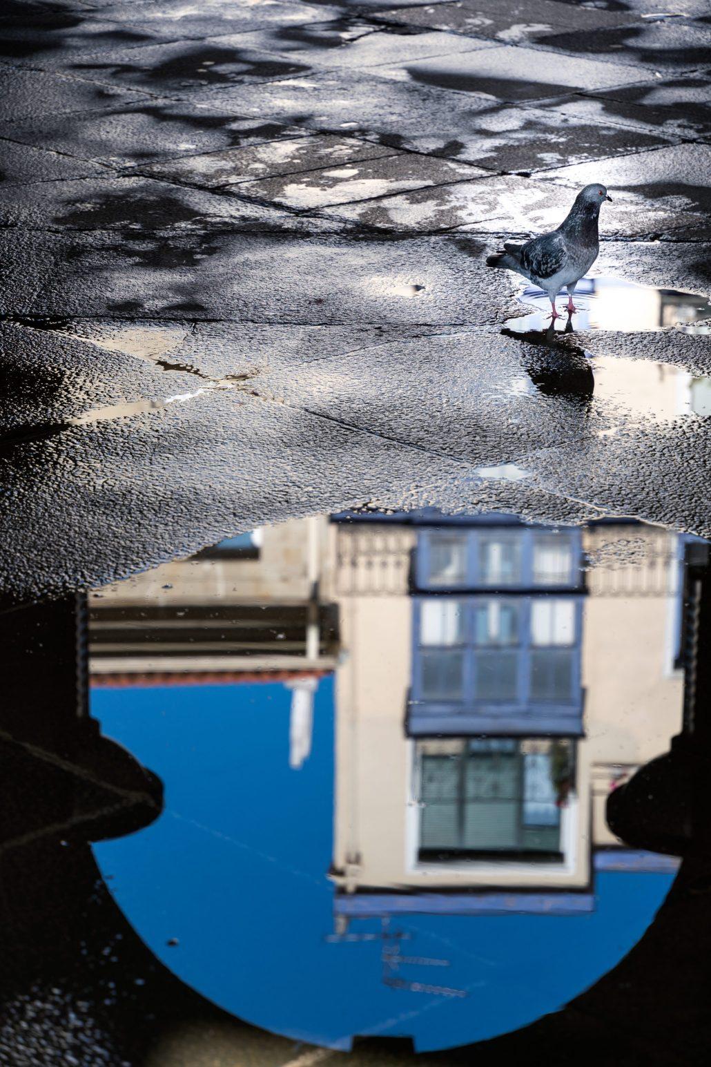 Reflet pigeonnant