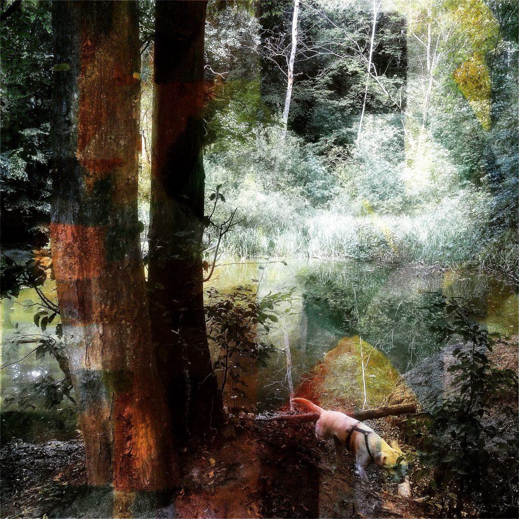 Impression forestière