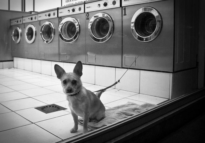 a dog in the coin laundry